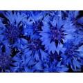 Пигмент красящий -  синий (кобальт) 15 мл