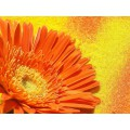Пигмент красящий -  оранжевый 15 мл