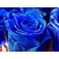 Краситель синий гелевый - 20 мл