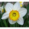 Нарцисс 15 мл